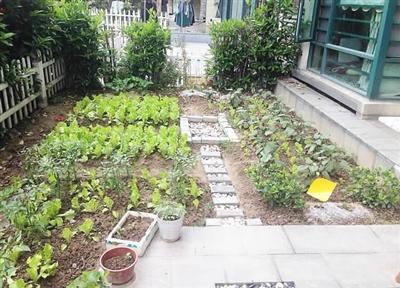 一楼小院种菜设计图图片