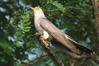 鸟类的主要特征