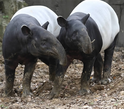 保护野生动物的宣传语高清无水印